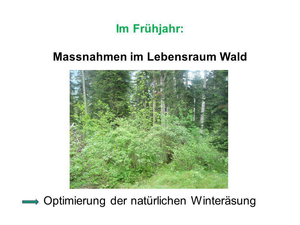 Im Frühjahr: Massnahmen im Lebensraum Wald Optimierung der natürlichen Winteräsung