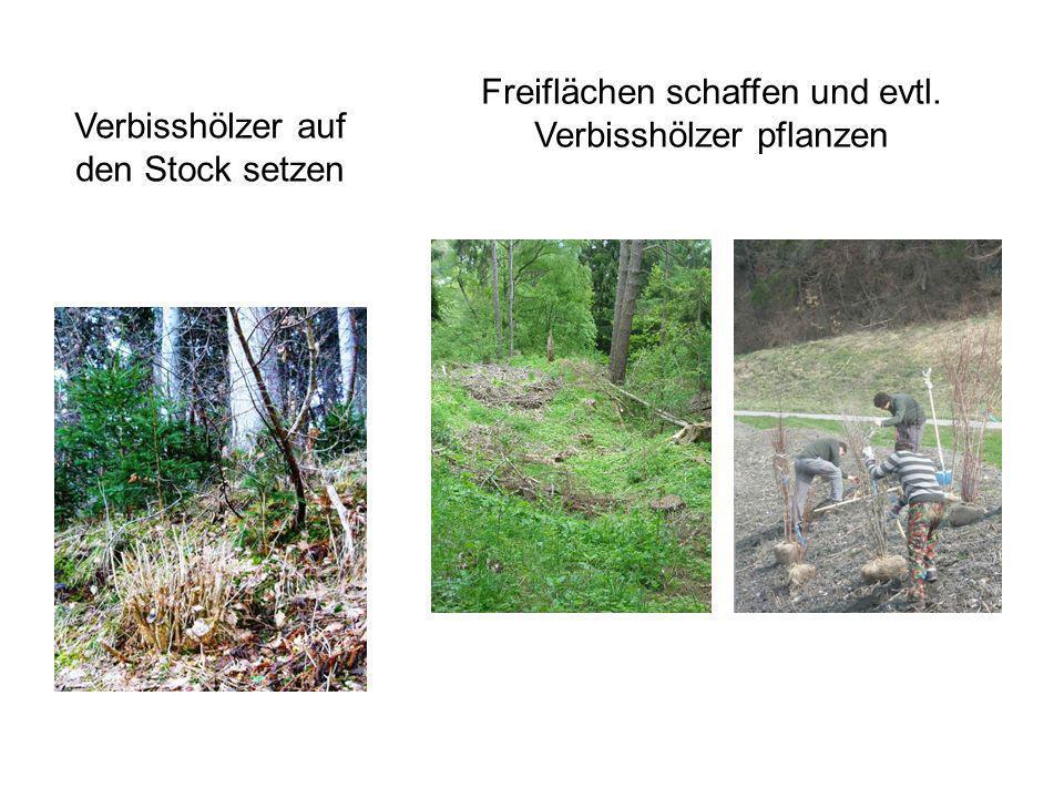 Zusammenarbeit Förster Wildhut Hegesektion