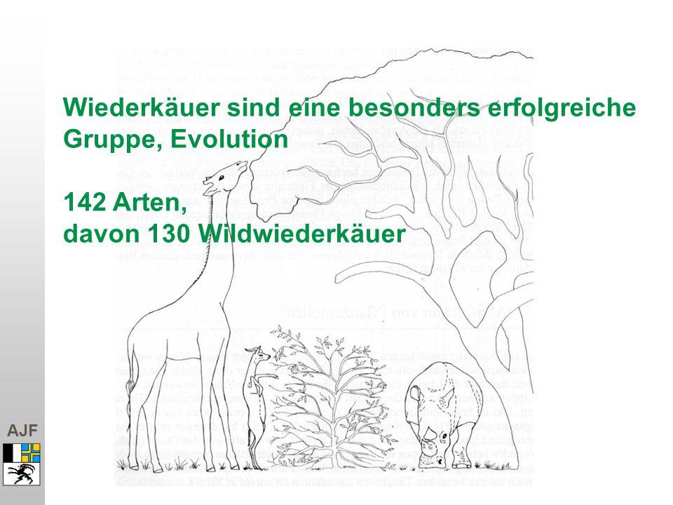 AJF Wiederkäuer sind eine besonders erfolgreiche Gruppe, Evolution 142 Arten, davon 130 Wildwiederkäuer