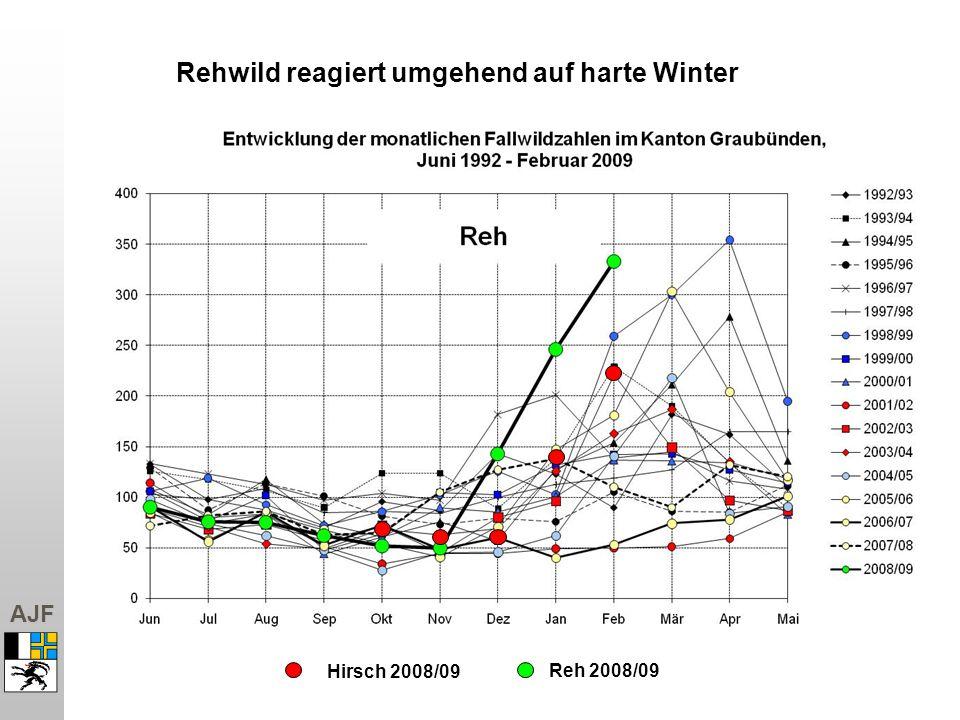 AJF Hirsch 2008/09 Rehwild reagiert umgehend auf harte Winter Reh 2008/09