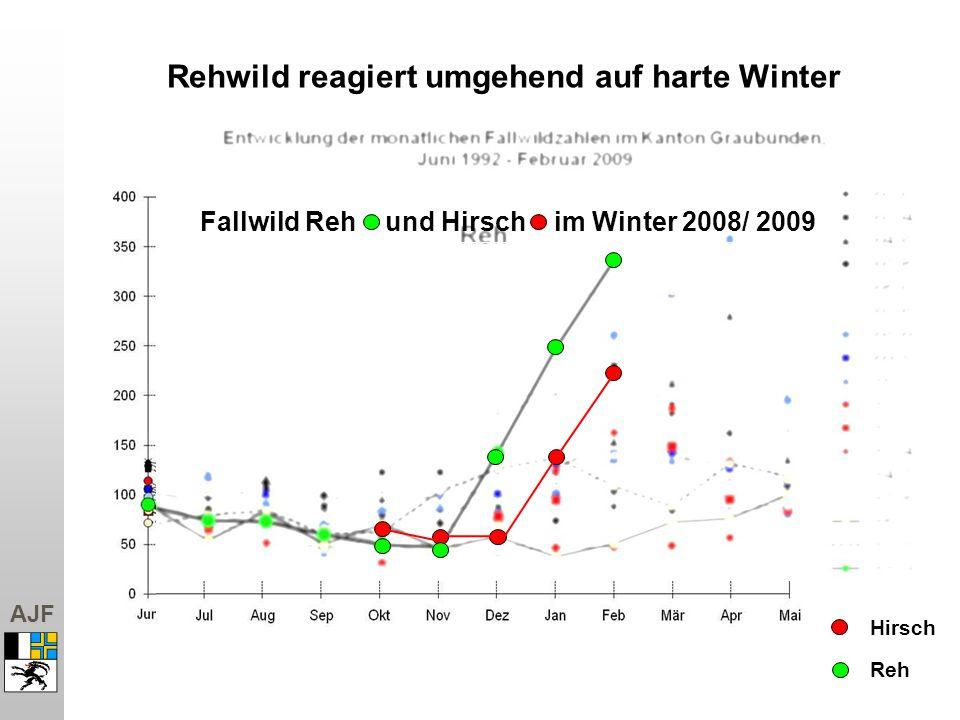 AJF Hirsch Rehwild reagiert umgehend auf harte Winter Reh Fallwild Reh und Hirsch im Winter 2008/ 2009