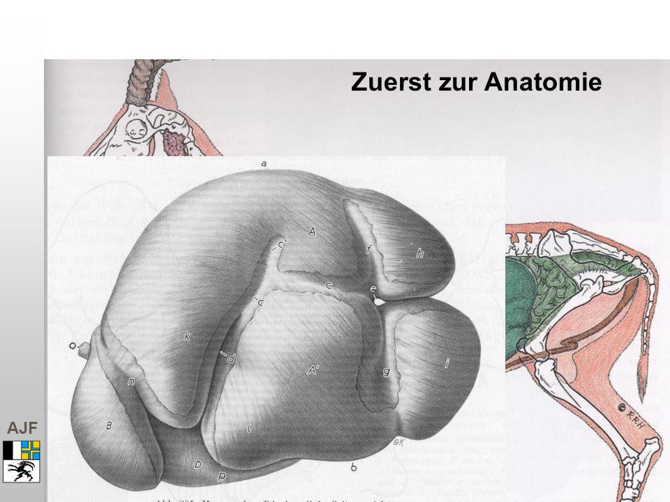 AJF Zuerst zur Anatomie
