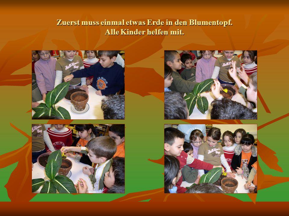 Zuerst muss einmal etwas Erde in den Blumentopf. Alle Kinder helfen mit.