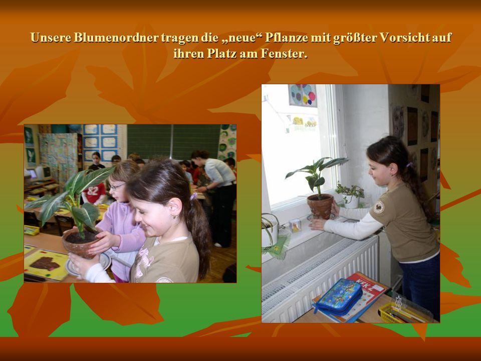 Unsere Blumenordner tragen die neue Pflanze mit größter Vorsicht auf ihren Platz am Fenster.