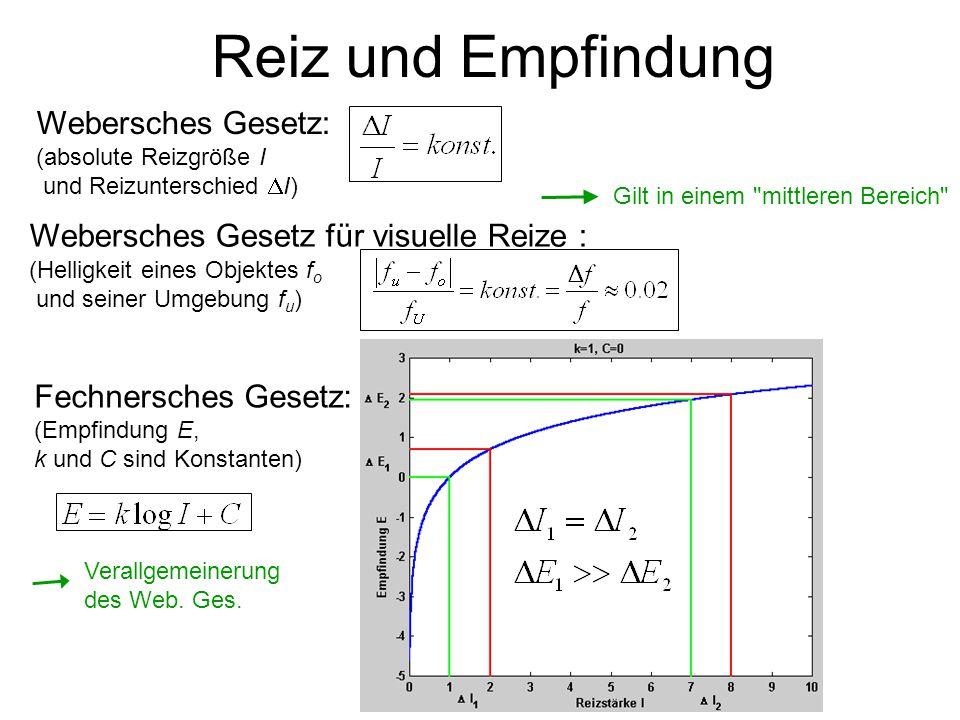 Reiz und Empfindung Webersches Gesetz für visuelle Reize : (Helligkeit eines Objektes f o und seiner Umgebung f u ) Webersches Gesetz: (absolute Reizgröße I und Reizunterschied I) Fechnersches Gesetz: (Empfindung E, k und C sind Konstanten) Gilt in einem mittleren Bereich Verallgemeinerung des Web.