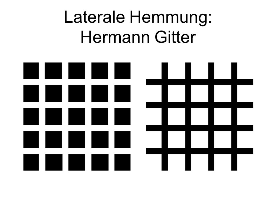 Laterale Hemmung: Hermann Gitter
