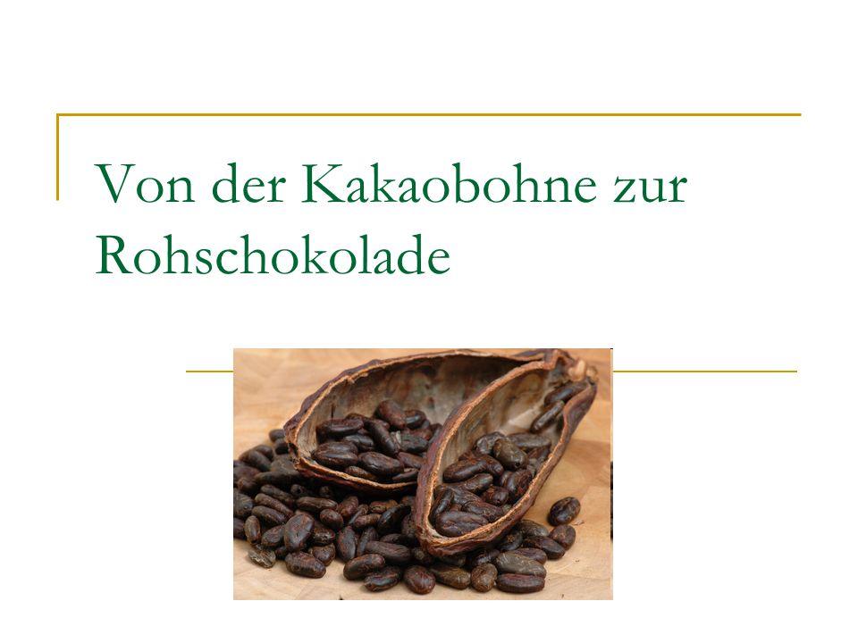Von der Kakaobohne zur Rohschokolade