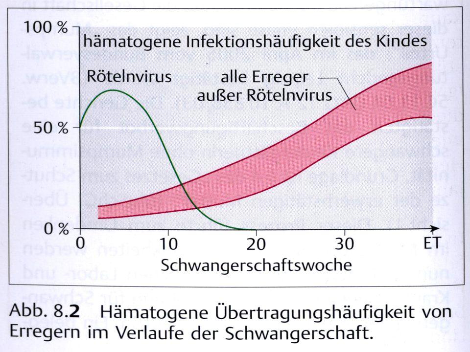 ÜbertragungHämatogenhöchstes Schädigungsrisiko bis 20.