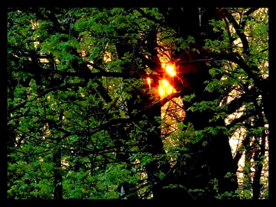 Habt Ehrfurcht vor dem Baum. (Respeta al árbol.) Er ist ein einziges Wunder.