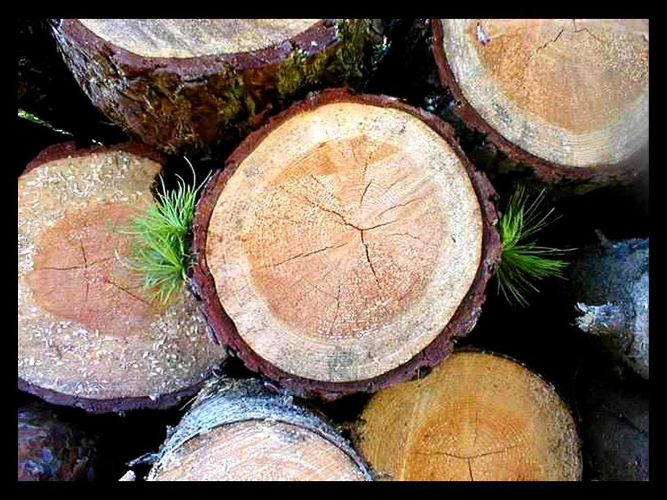 Habt Ehrfurcht vor dem Baum.(Respeta al árbol.) Er ist ein einziges Wunder.
