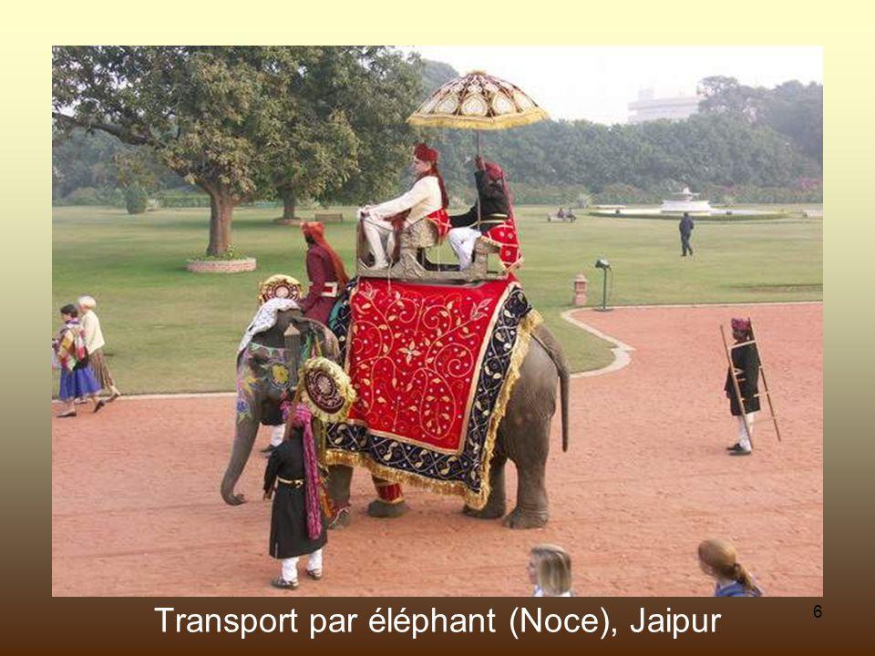 6 Transport par éléphant (Noce), Jaipur