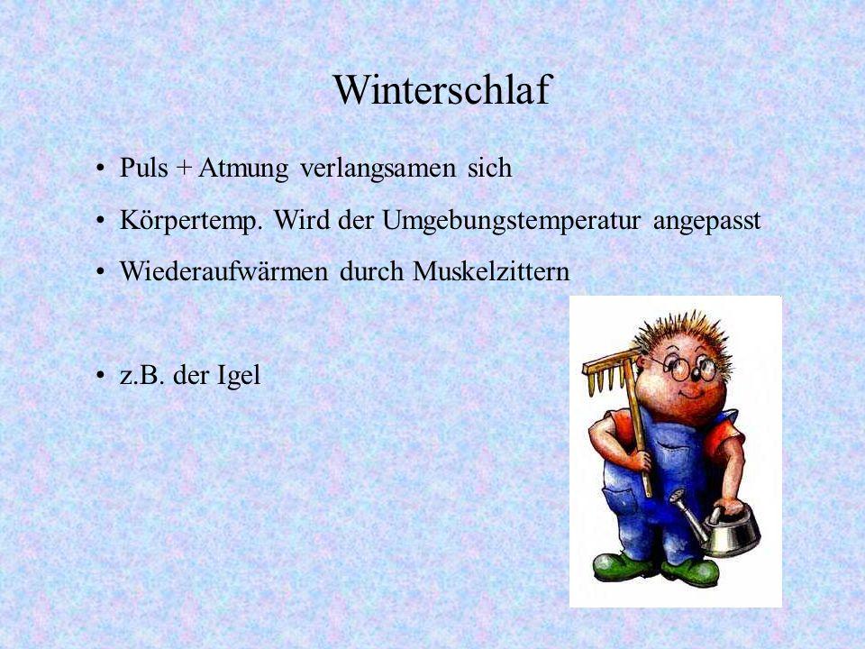 Winterschlaf, Winterruhe, Sommerschlaf, Torpor