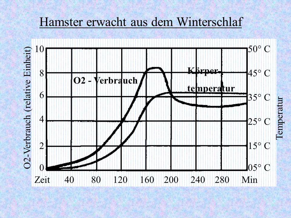 O2 - Verbrauch Körper- temperatur Zeit 40 80 120 160 200 240 280 Min 50° C 25° C 35° C 45° C 15° C 05° C0 2 4 6 8 10 O2-Verbrauch (relative Einheit) Temperatur Hamster erwacht aus dem Winterschlaf
