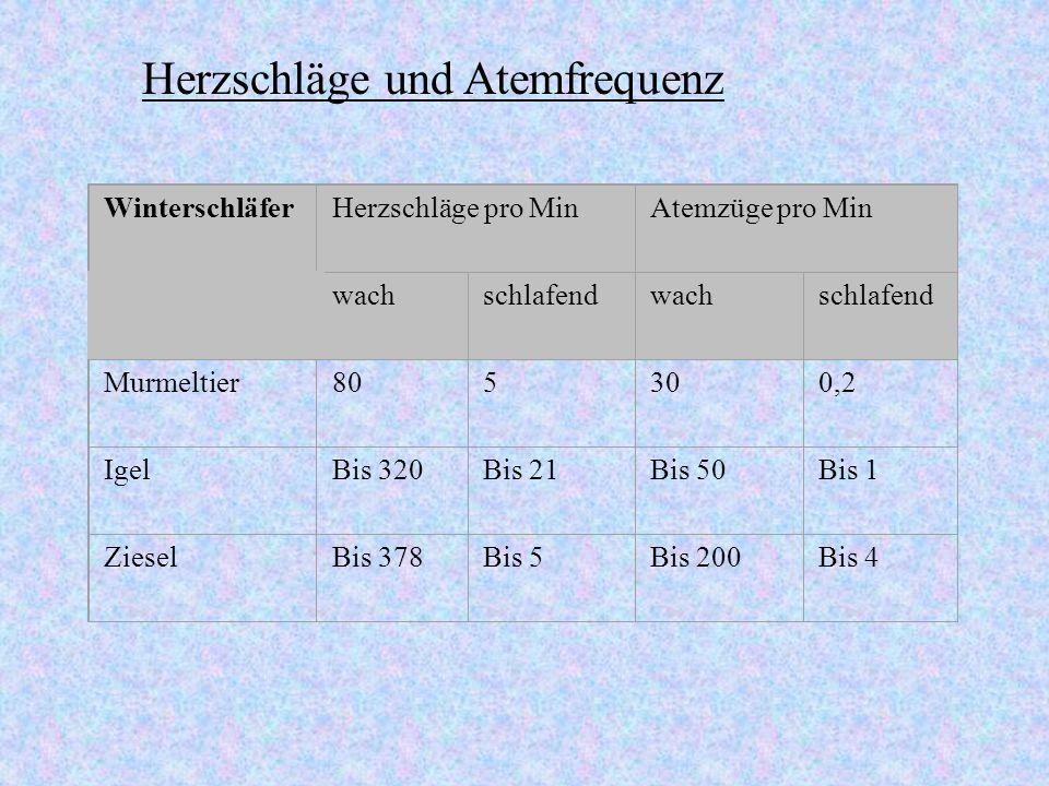 O2 - Verbrauch Körper- temperatur Zeit 40 80 120 160 200 240 280 Min 50° C 25° C 35° C 45° C 15° C 05° C0 2 4 6 8 10 O2-Verbrauch (relative Einheit) T