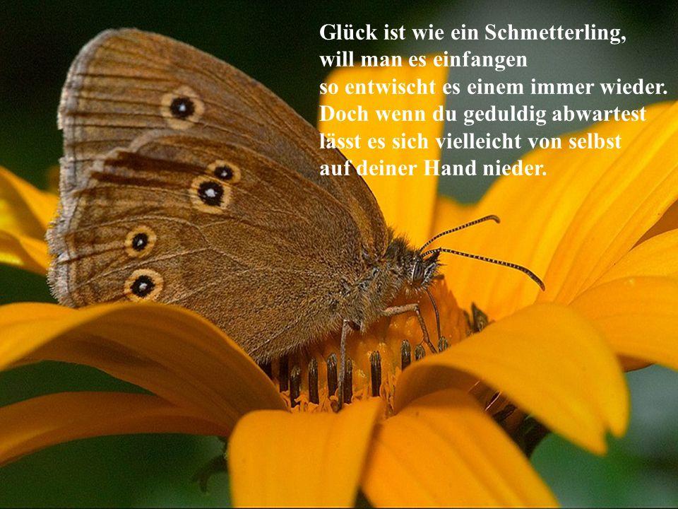 Glück ist wie ein Schmetterling, will man es einfangen so entwischt es einem immer wieder.
