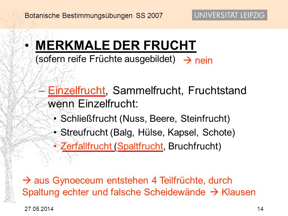 Botanische Bestimmungsübungen SS 2007 27.05.201414 MERKMALE DER FRUCHT (sofern reife Früchte ausgebildet) – Einzelfrucht, Sammelfrucht, Fruchtstand we