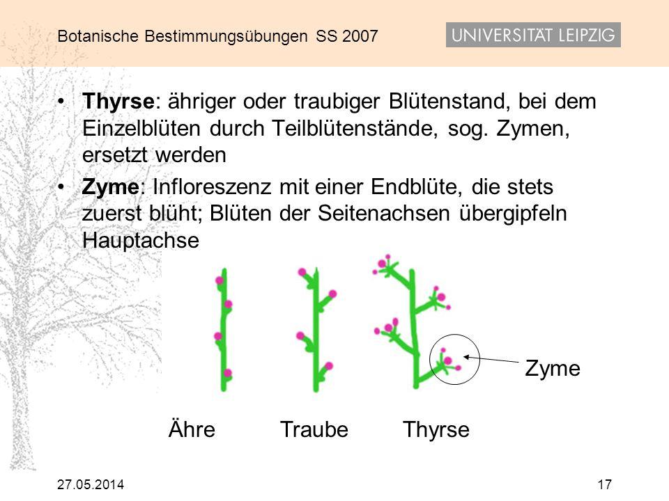 Botanische Bestimmungsübungen SS 2007 27.05.201417 Thyrse: ähriger oder traubiger Blütenstand, bei dem Einzelblüten durch Teilblütenstände, sog. Zymen
