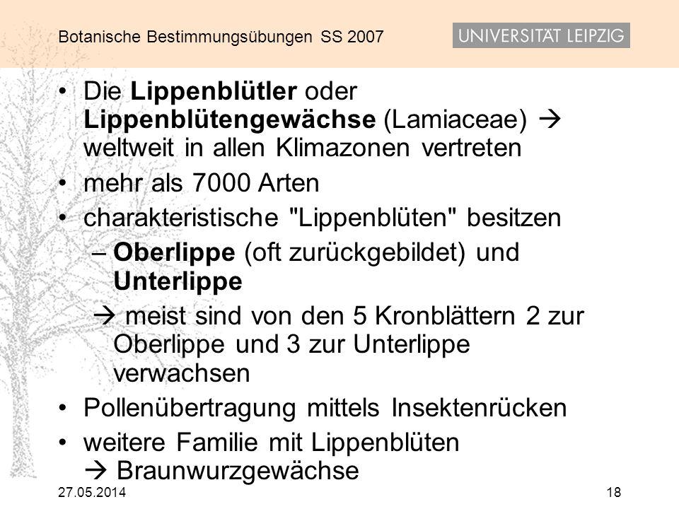 Botanische Bestimmungsübungen SS 2007 27.05.201418 Die Lippenblütler oder Lippenblütengewächse (Lamiaceae) weltweit in allen Klimazonen vertreten mehr