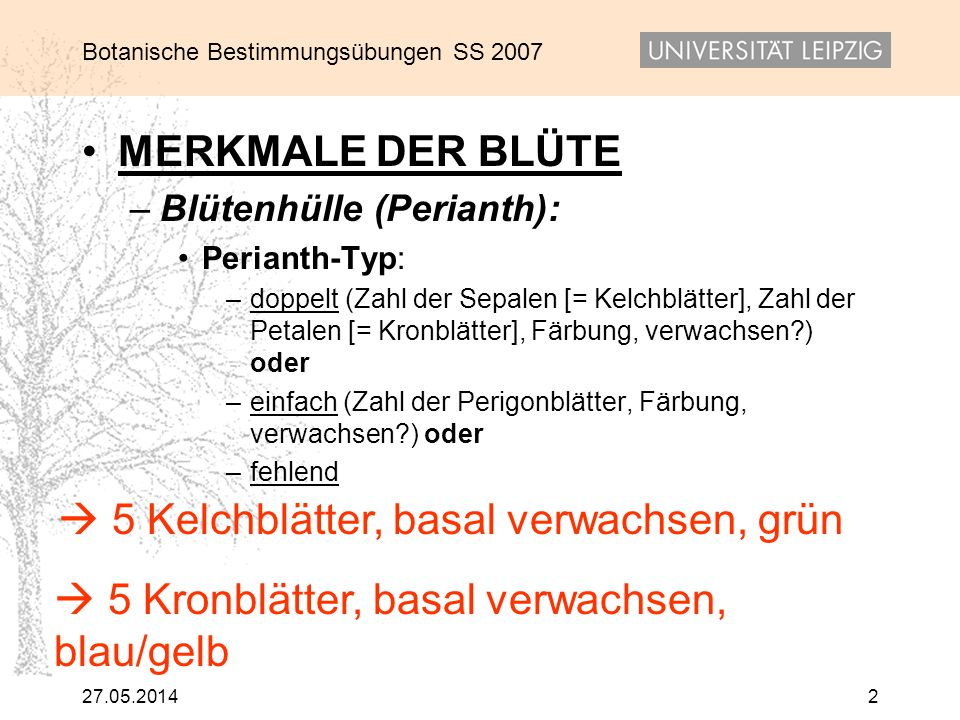Botanische Bestimmungsübungen SS 2007 27.05.20142 MERKMALE DER BLÜTE – Blütenhülle (Perianth): Perianth-Typ: – doppelt (Zahl der Sepalen [= Kelchblätt