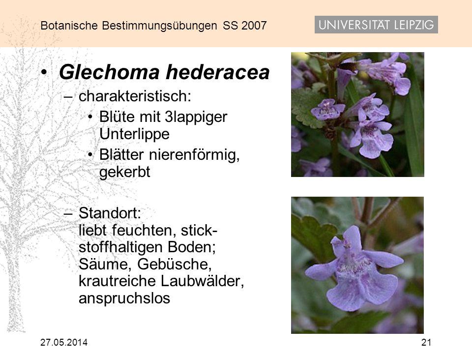 Botanische Bestimmungsübungen SS 2007 27.05.201421 Glechoma hederacea –charakteristisch: Blüte mit 3lappiger Unterlippe Blätter nierenförmig, gekerbt