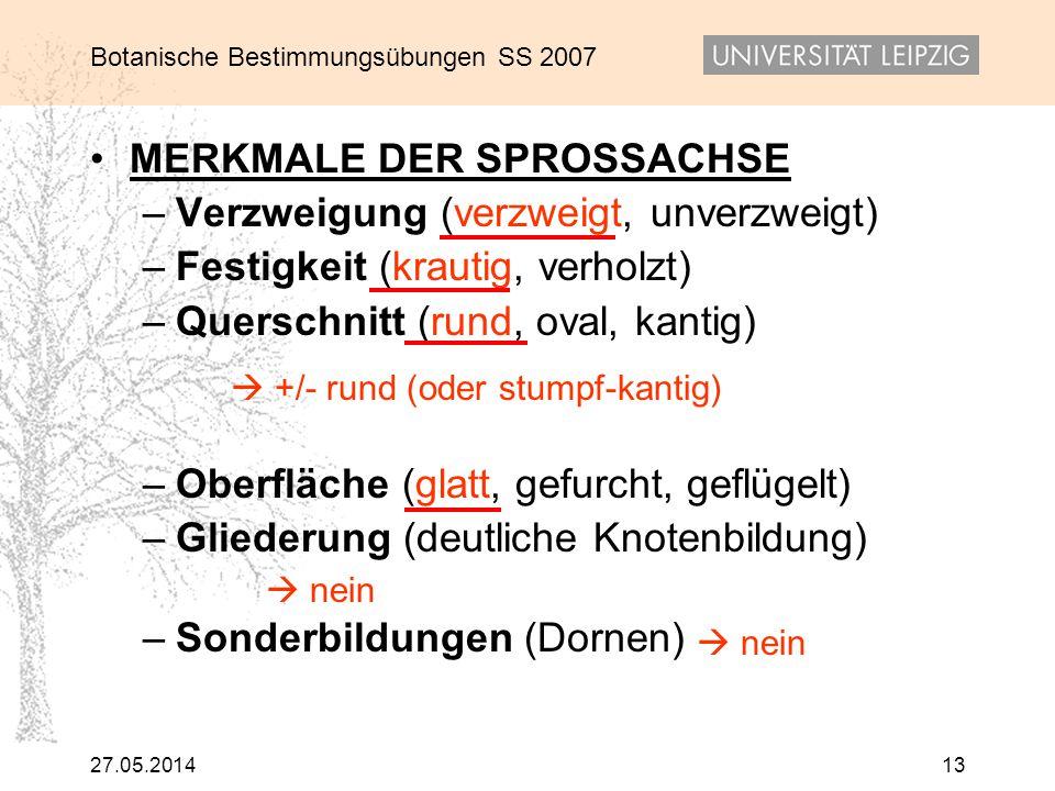Botanische Bestimmungsübungen SS 2007 27.05.201413 MERKMALE DER SPROSSACHSE – Verzweigung (verzweigt, unverzweigt) – Festigkeit (krautig, verholzt) –