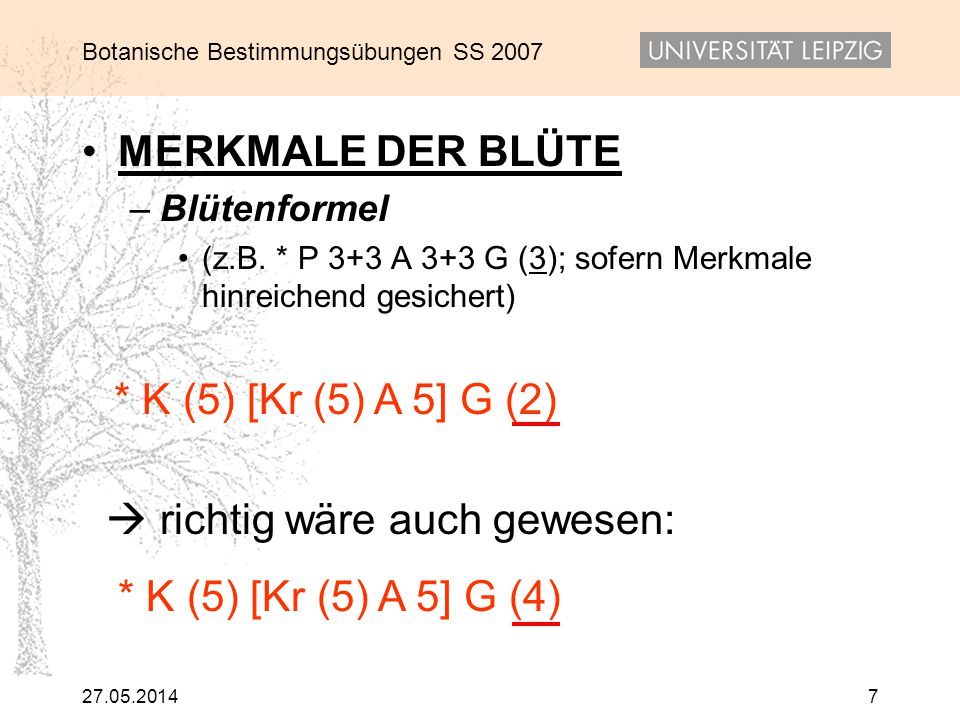 Botanische Bestimmungsübungen SS 2007 27.05.20147 MERKMALE DER BLÜTE – Blütenformel (z.B. * P 3+3 A 3+3 G (3); sofern Merkmale hinreichend gesichert)