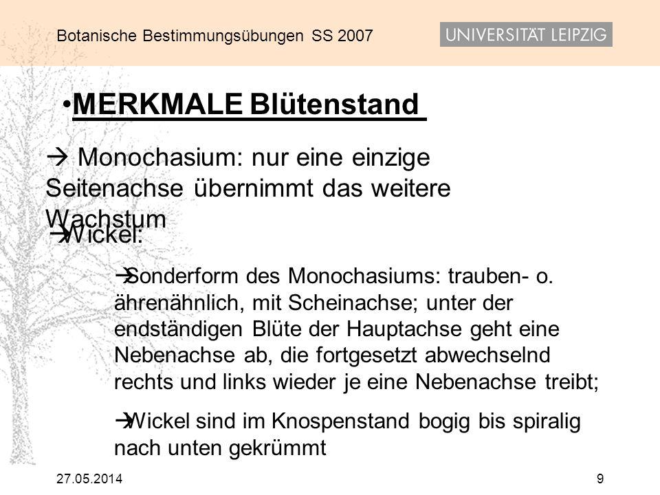 Botanische Bestimmungsübungen SS 2007 27.05.20149 Wickel: Sonderform des Monochasiums: trauben- o. ährenähnlich, mit Scheinachse; unter der endständig