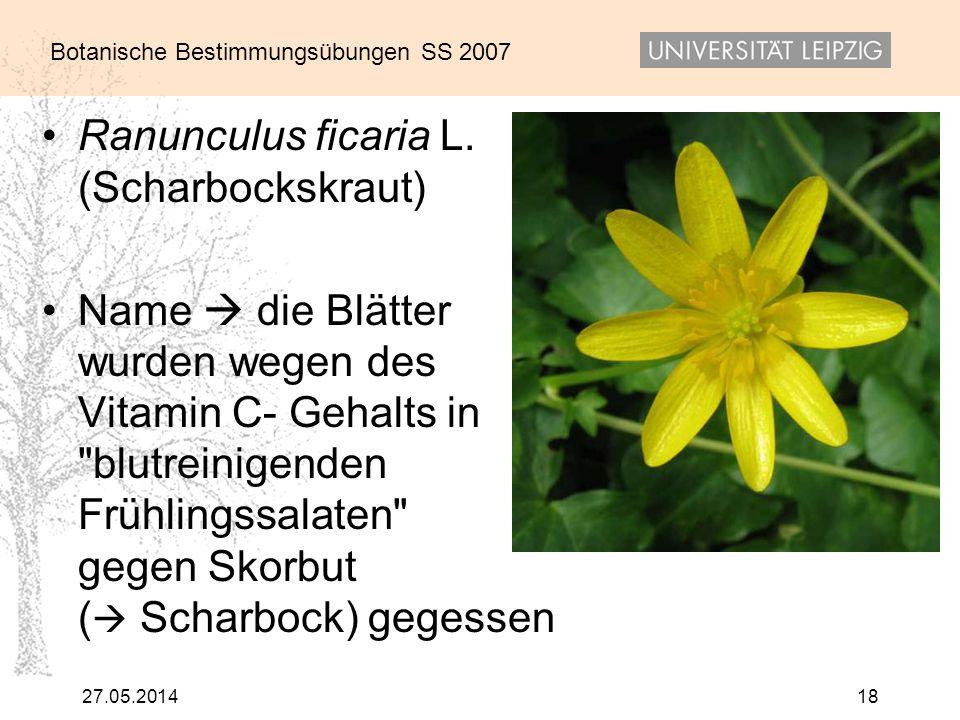 Botanische Bestimmungsübungen SS 2007 27.05.201418 Ranunculus ficaria L. (Scharbockskraut) Name die Blätter wurden wegen des Vitamin C- Gehalts in
