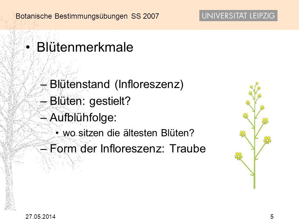 Botanische Bestimmungsübungen SS 2007 27.05.20145 Blütenmerkmale –Blütenstand (Infloreszenz) –Blüten: gestielt? –Aufblühfolge: wo sitzen die ältesten