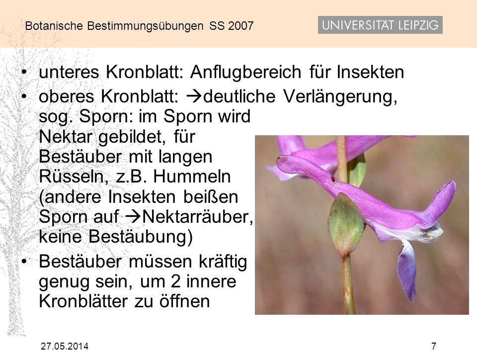 Botanische Bestimmungsübungen SS 2007 27.05.20147 unteres Kronblatt: Anflugbereich für Insekten oberes Kronblatt: deutliche Verlängerung, sog. Sporn: