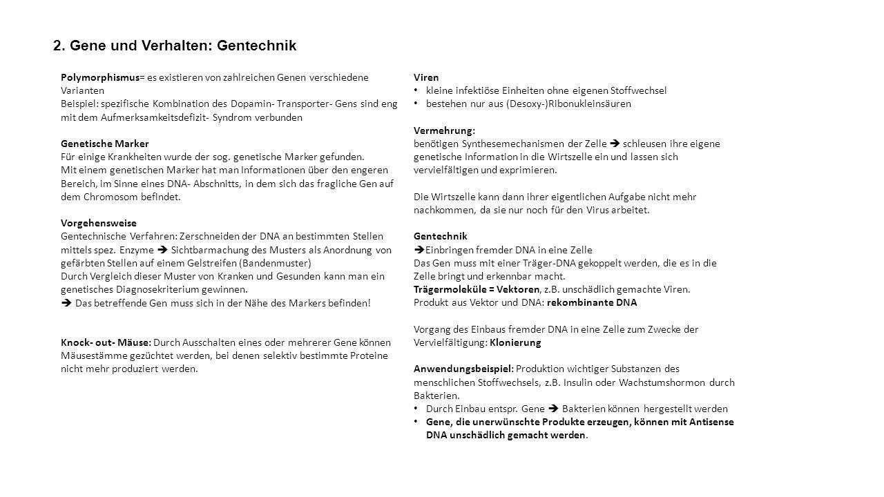 2. Gene und Verhalten: Gentechnik Polymorphismus= es existieren von zahlreichen Genen verschiedene Varianten Beispiel: spezifische Kombination des Dop