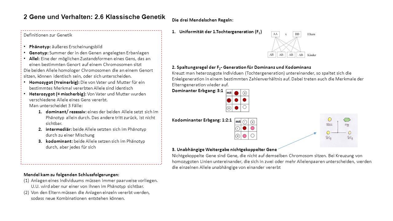 Die drei Mendelschen Regeln: 1.Uniformität der 1.Tochtergeneration (F 1 ) 2. Spaltungsregel der F 2 - Generation für Dominanz und Kodominanz Kreuzt ma