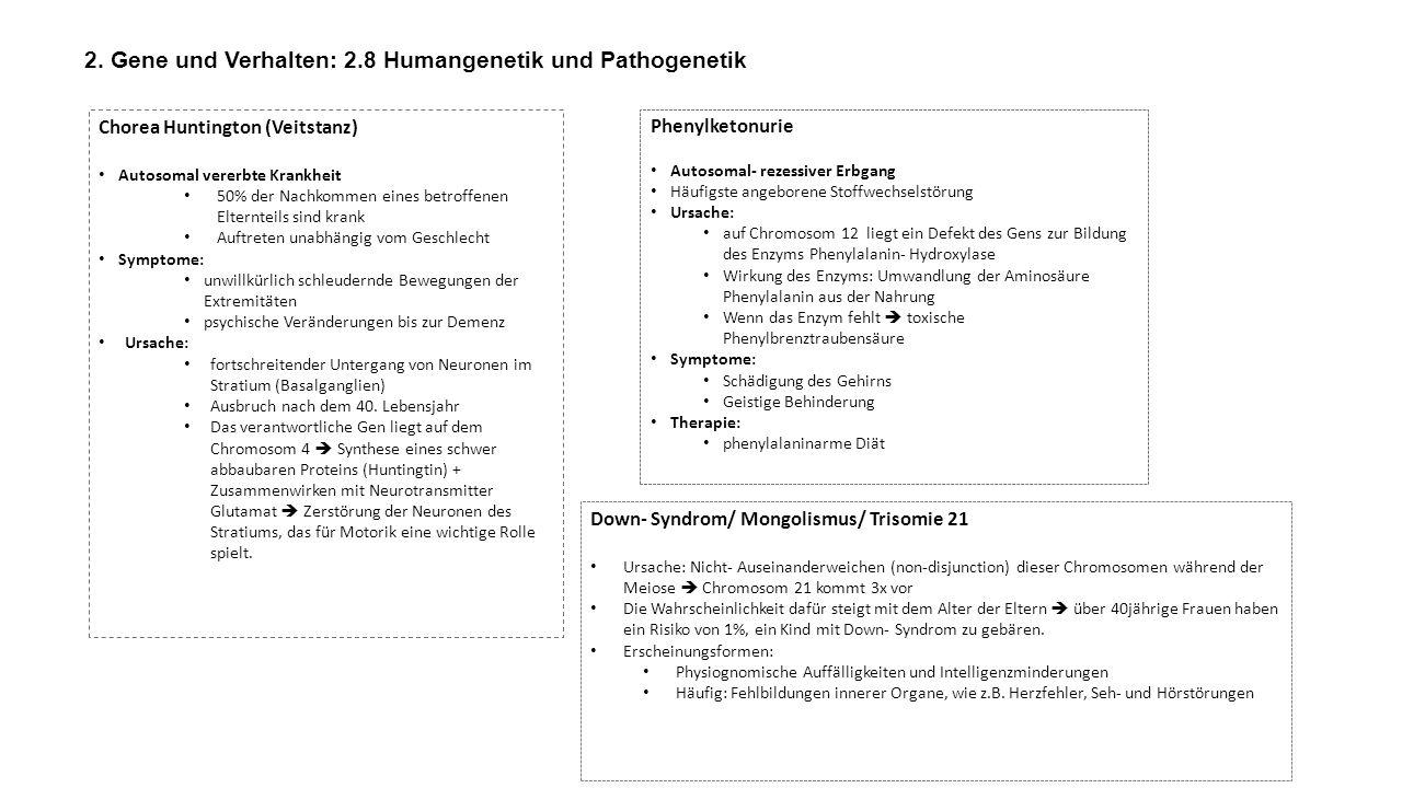 2. Gene und Verhalten: 2.8 Humangenetik und Pathogenetik Chorea Huntington (Veitstanz) Autosomal vererbte Krankheit 50% der Nachkommen eines betroffen