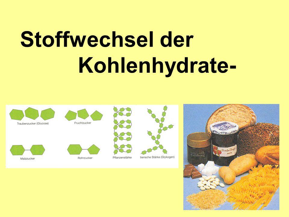 Spaltung der Kohlenhydrate im Verdauungstrakt bis zu Zweifach- und Einfachzuckern v.a.