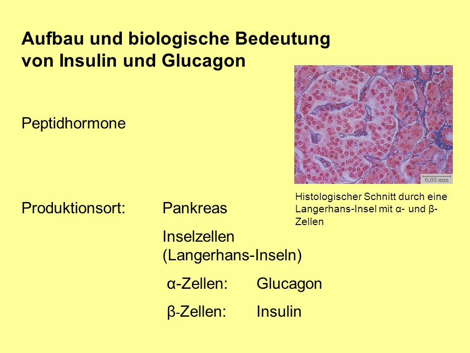 Aufbau und biologische Bedeutung von Insulin und Glucagon Peptidhormone Produktionsort:Pankreas Inselzellen (Langerhans-Inseln) α-Zellen: Glucagon β -