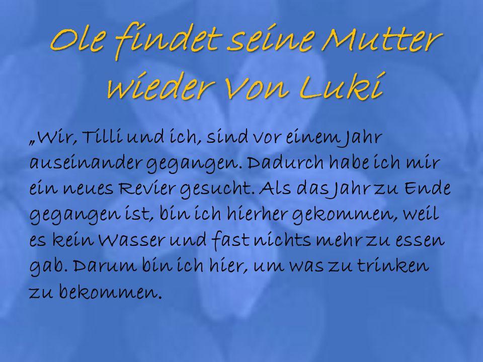 Ole findet seine Mutter wieder Von Luki Wir, Tilli und ich, sind vor einem Jahr auseinander gegangen.