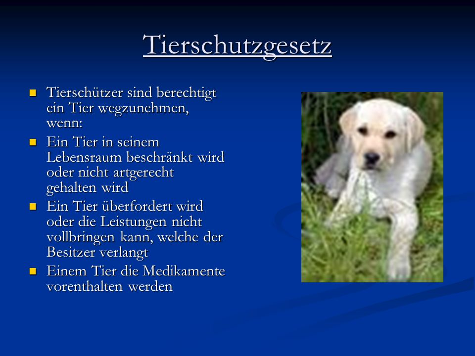 Tierschutzgesetz Tierschützer sind berechtigt ein Tier wegzunehmen, wenn: Tierschützer sind berechtigt ein Tier wegzunehmen, wenn: Ein Tier in seinem