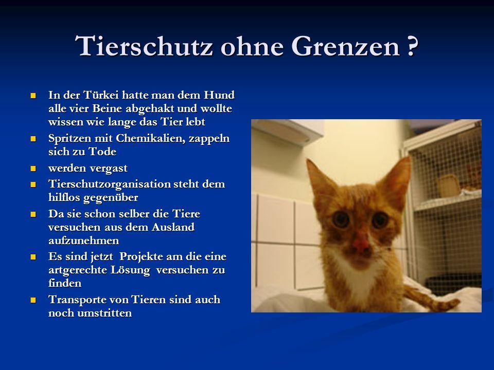 Tierschutz ohne Grenzen ? In der Türkei hatte man dem Hund alle vier Beine abgehakt und wollte wissen wie lange das Tier lebt In der Türkei hatte man