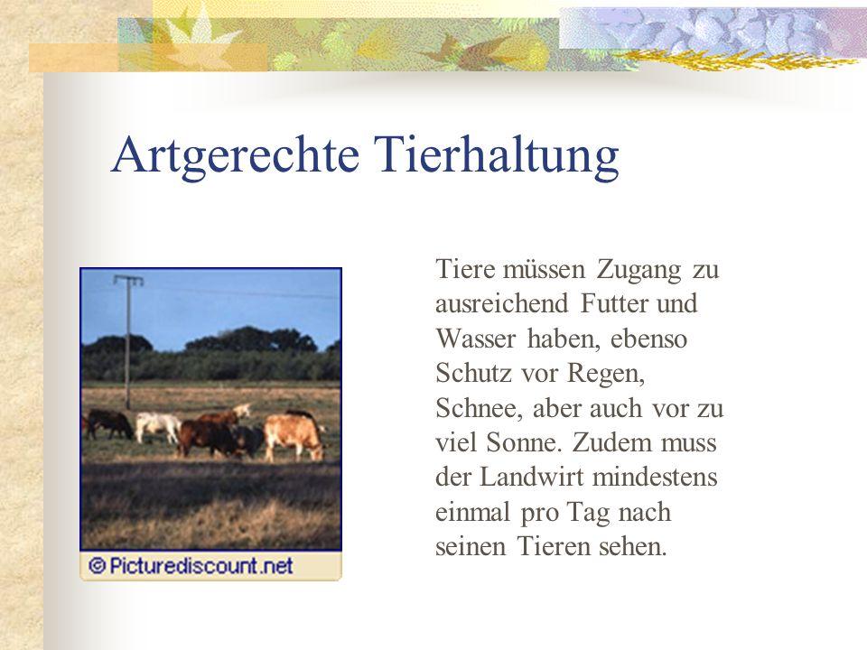 Massentierhaltung Im Tierschutzgesetz wird als Massen- tierhaltung definiert, wenn in Betreiben z.B.