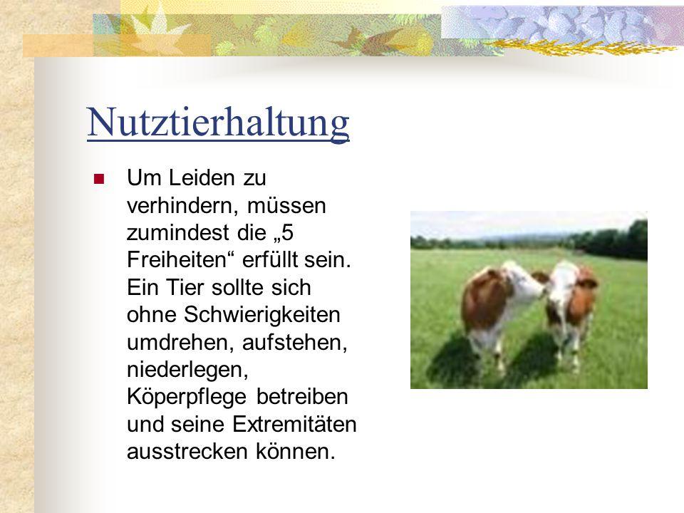 Nutztierhaltung Um Leiden zu verhindern, müssen zumindest die 5 Freiheiten erfüllt sein. Ein Tier sollte sich ohne Schwierigkeiten umdrehen, aufstehen