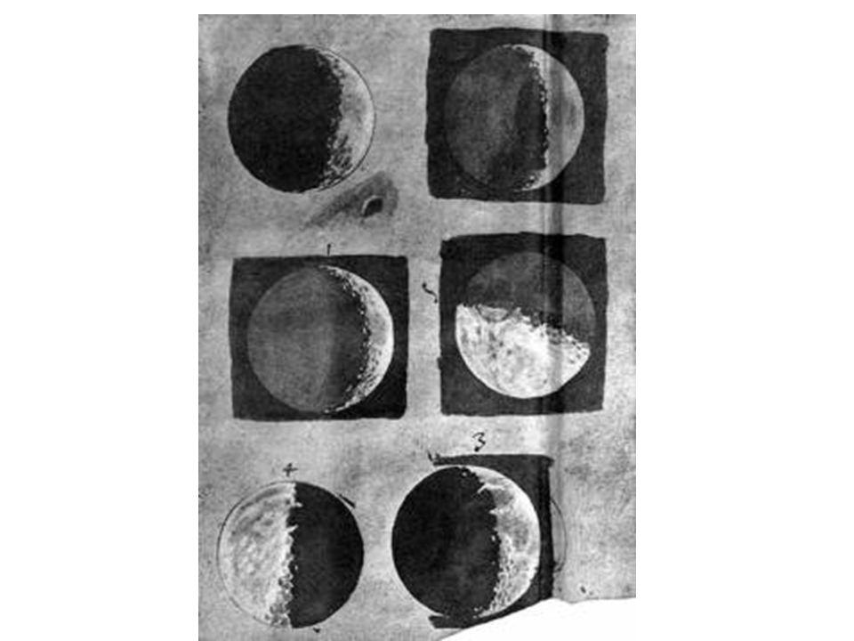 Sybilla Merians Zeichnungen von Pflanzen