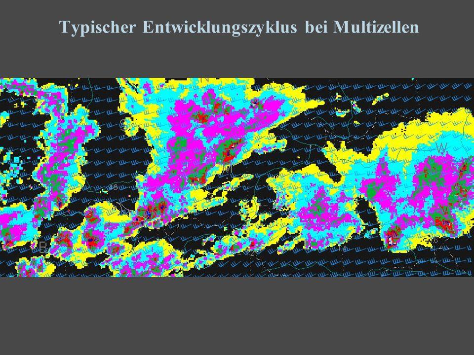 21 Typischer Entwicklungszyklus bei Multizellen