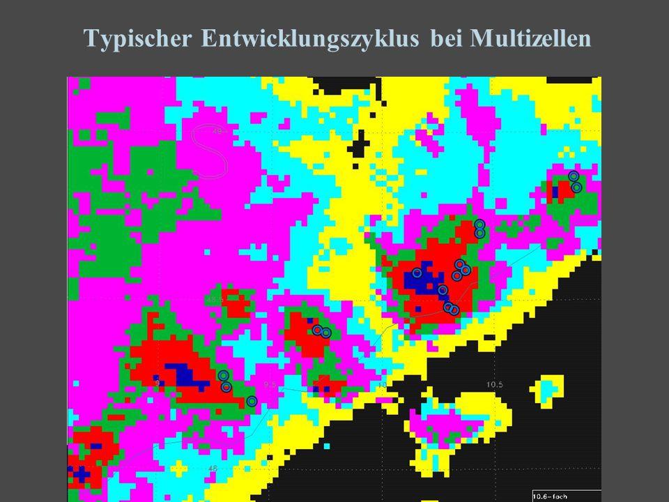 27 Typischer Entwicklungszyklus bei Multizellen