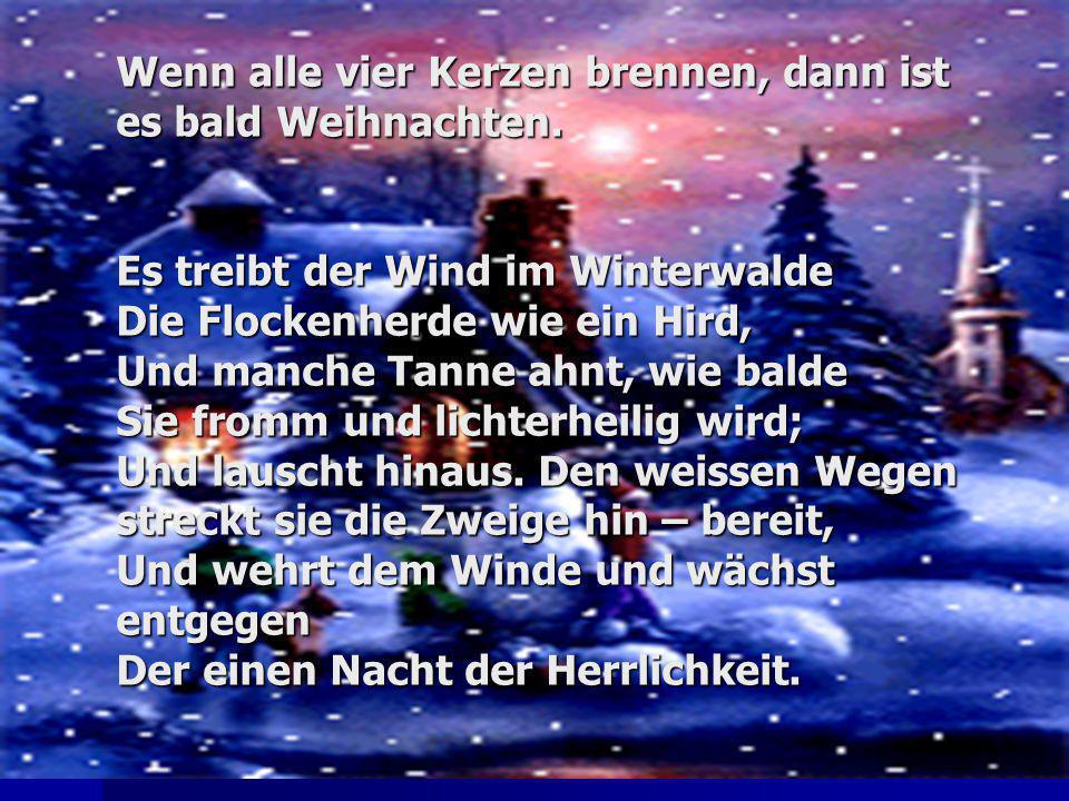 Wenn alle vier Kerzen brennen, dann ist es bald Weihnachten. Es treibt der Wind im Winterwalde Die Flockenherde wie ein Hird, Und manche Tanne ahnt, w