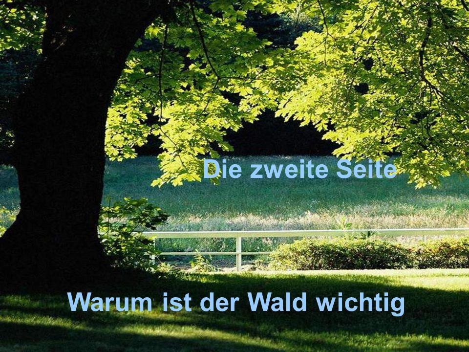 Die zweite Seite Warum ist der Wald wichtig Die zweite Seite