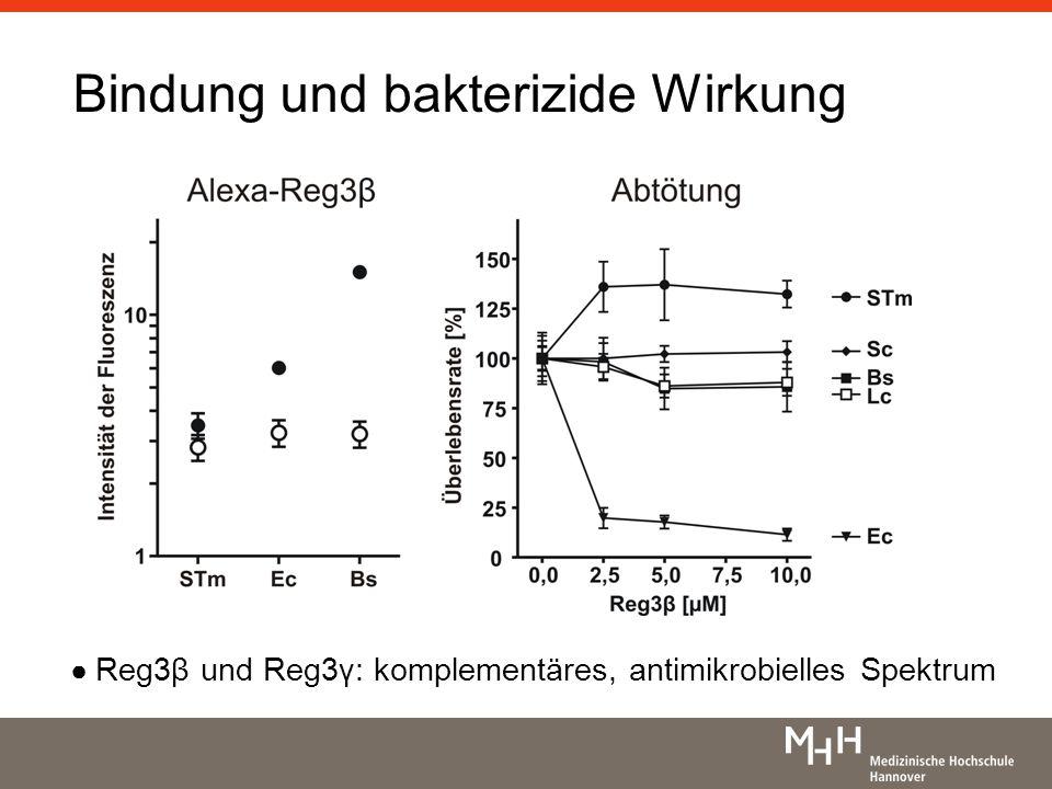 Bindung und bakterizide Wirkung Reg3β und Reg3γ: komplementäres, antimikrobielles Spektrum