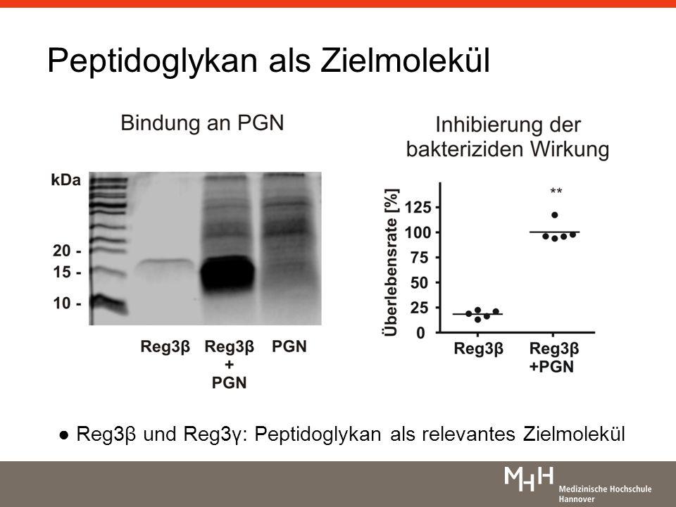 Peptidoglykan als Zielmolekül Reg3β und Reg3γ: Peptidoglykan als relevantes Zielmolekül