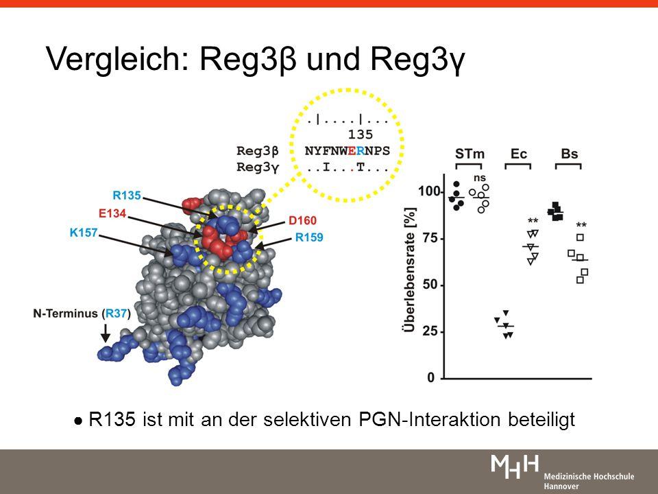 Vergleich: Reg3β und Reg3γ R135 ist mit an der selektiven PGN-Interaktion beteiligt