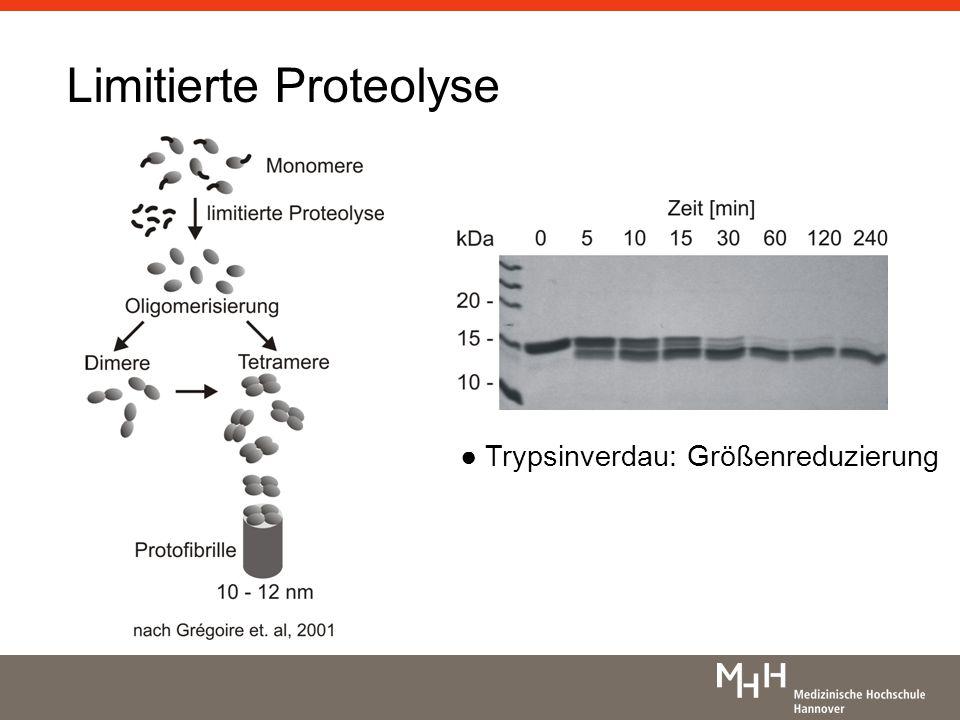 Limitierte Proteolyse Trypsinverdau: Größenreduzierung