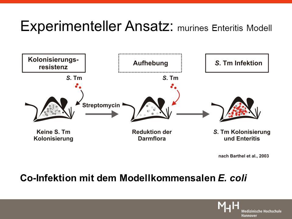 Lipid A - Modifikationen eine rigide LPS-Schicht verhindert den Zugang zum PGN Modifikationen von E.